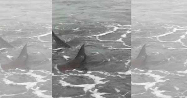 tiburones en Monte Hermoso