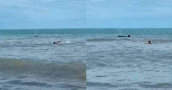 orca en Monte Hermoso