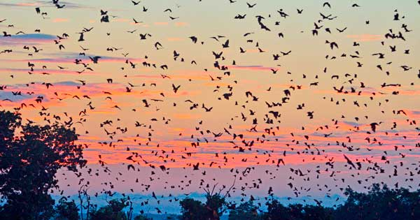 bandada de murciélagos