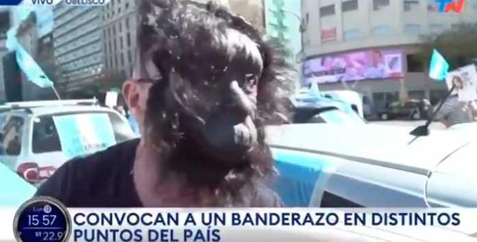 gorila en Argentina